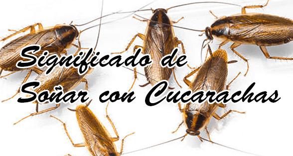 Significado de so ar con cucarachas qu significa for Como eliminar cucarachas del desague