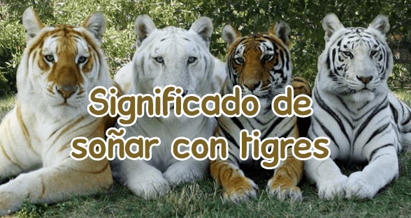 significado de so ar con tigres. Black Bedroom Furniture Sets. Home Design Ideas