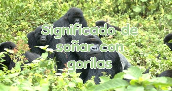 sonar con gorilas