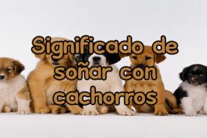 soñar con cachorros