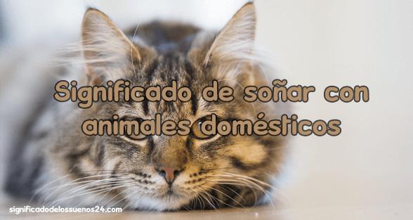 sonar animales domesticos